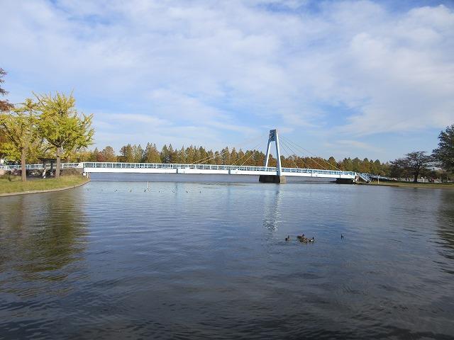 年賀ハガキ用の写真撮影で水元公園に行ってきました!
