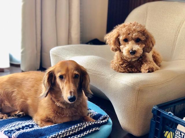 本日は、我が家の愛犬2名の近況報告をさせて頂きま~す。